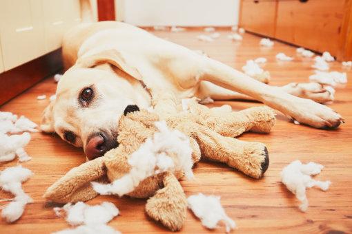 Weshalb lohnt es sich stets auf die Erregung des Hundes zu achten?