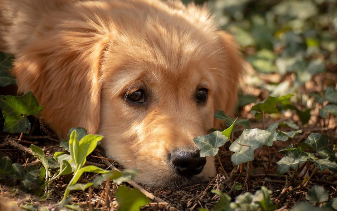 Wie eine Begegnung mit einem Welpen mein Leben veränderte und warum ich dennoch keinen eigenen Hund habe